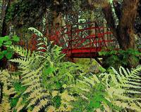 Ferns by the Red Bridge