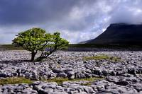 The Yorkshire Dales - Ingleborough from White Scar