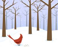 Cardinal in the snowy forest