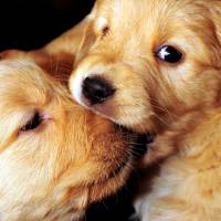 Puppy Love! by Laura Mountainspring