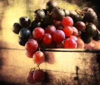Grapes of the Fall - Mono & Color