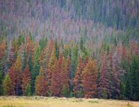 Rocky Mountain Tree Line