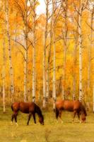 Two Grazing Horses in the Autumn Colors