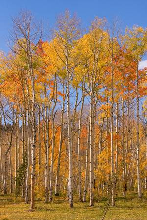 Fall Foliage Color V