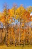 Fall Foliage Color Vertical Image Orton