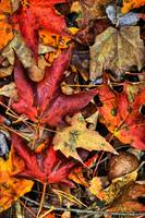 Fall Texture 2 by Jim Crotty