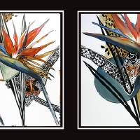 Bird of Paradise I and II (a composite of two imag Art Prints & Posters by Cheryl Paolini