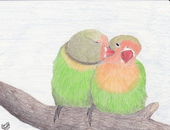 Preening love birds by harmonicnature 2010