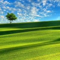 Tree in the field Art Prints & Posters by Robert Smith