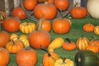 Pumpkins of all Kinds