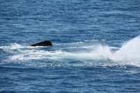 NaP_ Whale Watching135