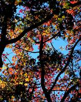 Looking Up Toward Autumn