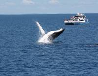 NaP_ Whale Watching169a