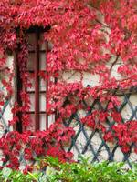 Fall Leaves II, Chateau Chenonceau, France
