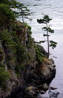 Deception Pass Tree 2