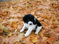 Puppy in Autumn