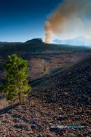 Forest Fire over the Painted Desert