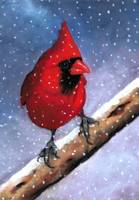 Bright Red Cardinal in Snow
