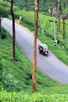 In munnar you will get to see only green !
