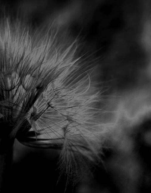 Going to Seed    0320 Black Edit