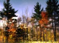 Abstract Fall Scene In New Hampshire