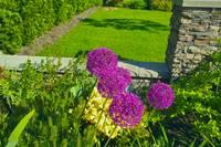 Summer Garden by Priscilla Turner