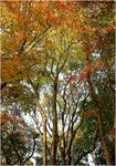 Autumn Trees 3