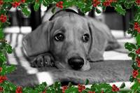 Puppy with christmas theme