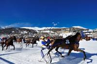 Horses Race at White Turf