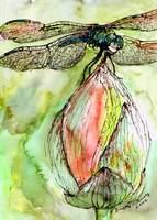 Dragonfly Watercolor & Ink by Ginette Callaway