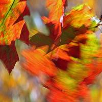 AutumnScenes gallery