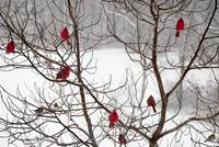 Wild Birds in Winter