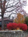 Fall at the Ragged Gardens, Blowing Rock, NC