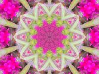 Pink Flower Scope