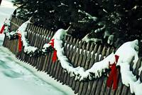 Holiday Fence