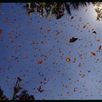 Monarch Sky by National Geographic