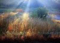 Morning Light on the Marsh by Carol Groenen