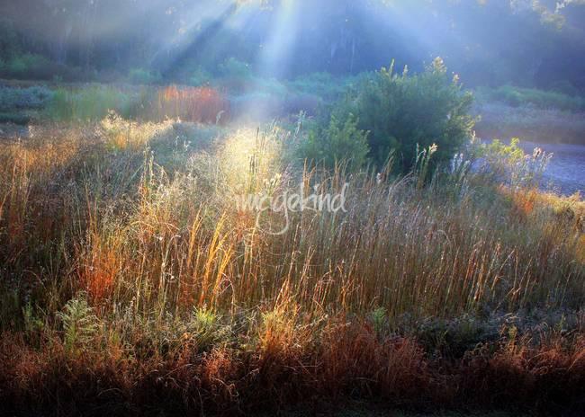 Morning Light on the Marsh