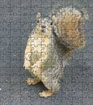 puzzled squirrel