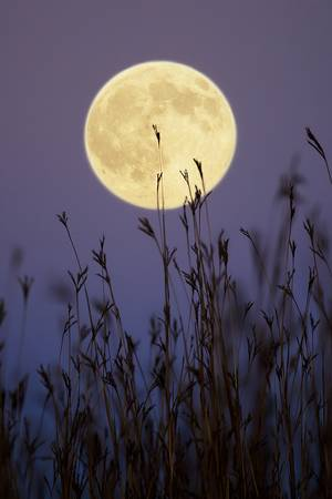 Hunters Moon 2 by Jim Crotty by Jim Crotty