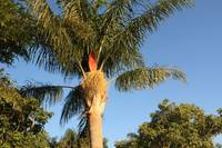 Jayne's Palm tree!