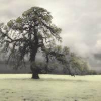 Oak Tree III Art Prints & Posters by diannepoinskiphotography