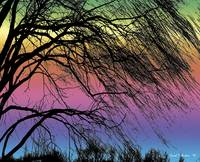 Weeping Willow Tree Rainbow Meditation Wall Art