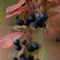 berries by Connie Yost