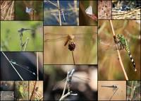 Collage Marsh Life by Carol Groenen