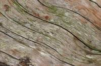 lines in a driftwood log