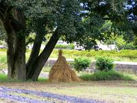 Haystack Under a Tree