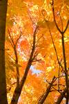 """In The Autumn Mood by James """"BO"""" Insogna"""