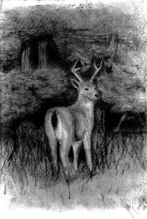 Deer Drawing 3 - Deer by crowley