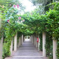 Walkway in Paradise Art Prints & Posters by Tracy Gorman